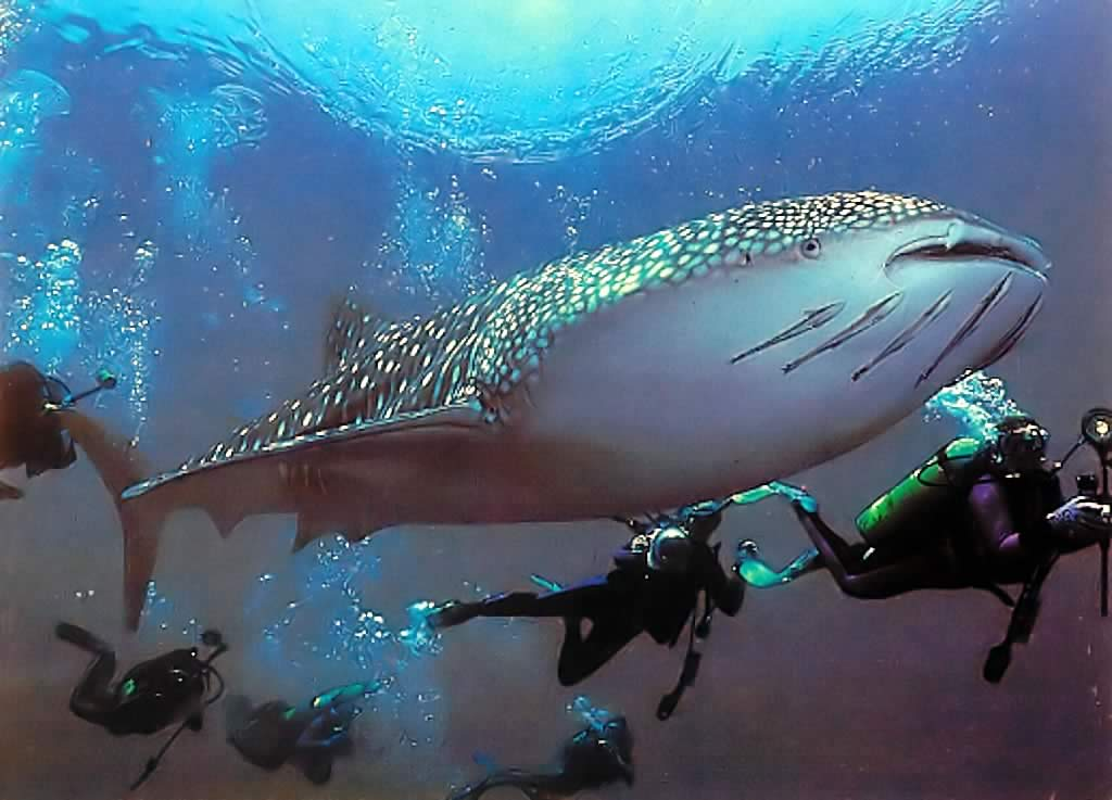 wswreck Scuba Diving Sport, You'll Find It Enjoyable..