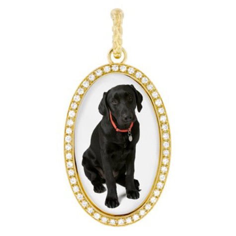 -за-кучета-2-475x475 Dress Your Dog In Jewels