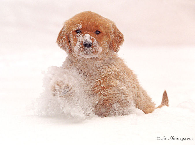 1golden_retriever What Are the Most Popular Dog Breeds in the World?