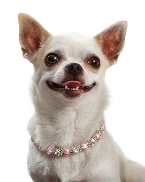 46-475x593 Dress Your Dog In Jewels