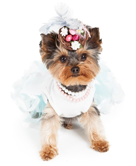 66991922-475x579 Dress Your Dog In Jewels