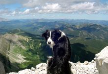 Photo of Top 10 Smartest Dog Breeds in the World