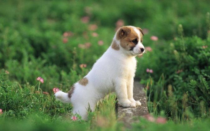 Boxer-Puppies What Are the Most Popular Dog Breeds in the World?