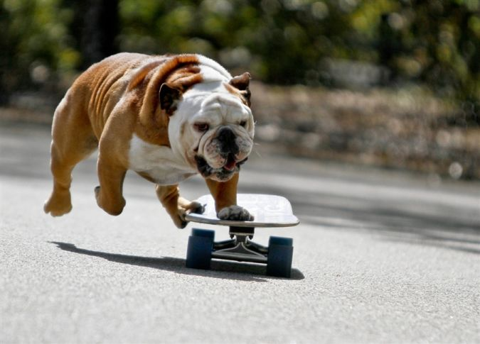 Bulldog What Are the Most Popular Dog Breeds in the World?