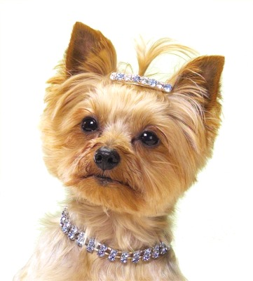 Dog-Necklaces Dress Your Dog In Jewels