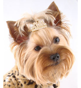 Dog-Tiara-Hair-Barrettes Dress Your Dog In Jewels