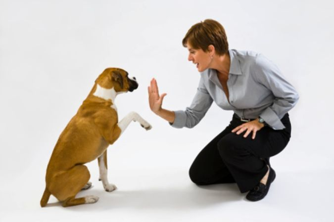 Dog-Training-Technique The Secrets of Training Dogs Are Now Revealed