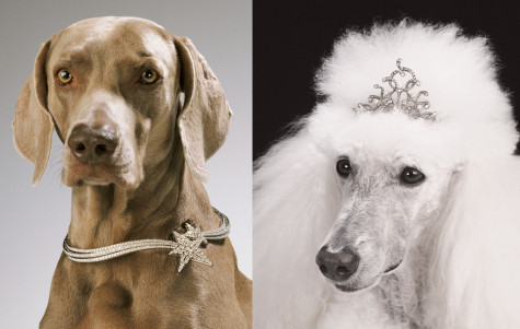 DogJewelry-02-475x301 Dress Your Dog In Jewels