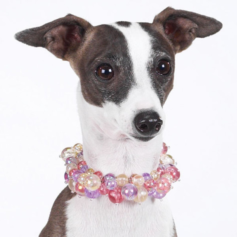 Dog_Autumn_Necklace-475x475 Dress Your Dog In Jewels