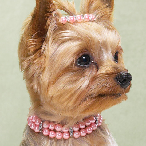 Dog_DoubleStrandPearlNecklaces-475x475-1 Dress Your Dog In Jewels
