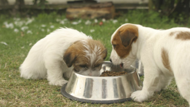 "Photo of How to Protect Your Dog Using "" Dog Food Secrets """