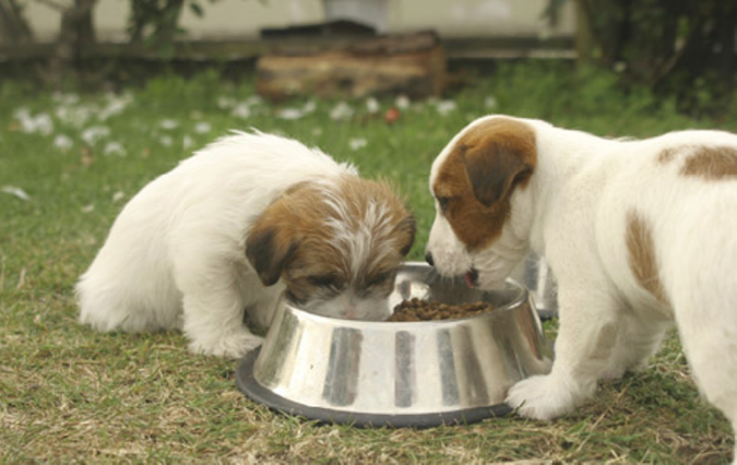 "Dog_Food_Budget How to Protect Your Dog Using "" Dog Food Secrets """