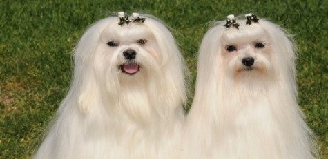 L_colourcoats4-475x231 Dress Your Dog In Jewels