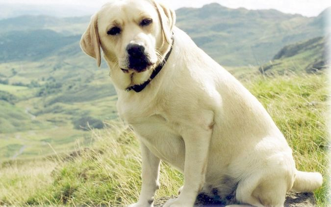 Lab-3 Top 10 Smartest Dog Breeds in the World