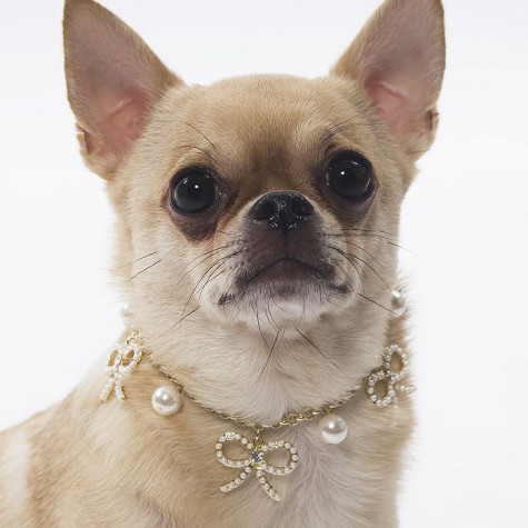 Pearl-font-b-Knot-b-font-475x475 Dress Your Dog In Jewels