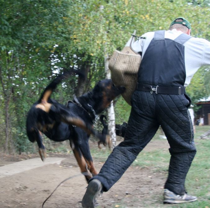 """Rottweiler. """"Watch out"""" and Keep Away from These 10 Most Dangerous Dogs"""