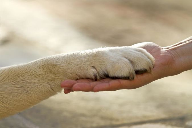 Secrets-To-Dog-Training The Secrets of Training Dogs Are Now Revealed