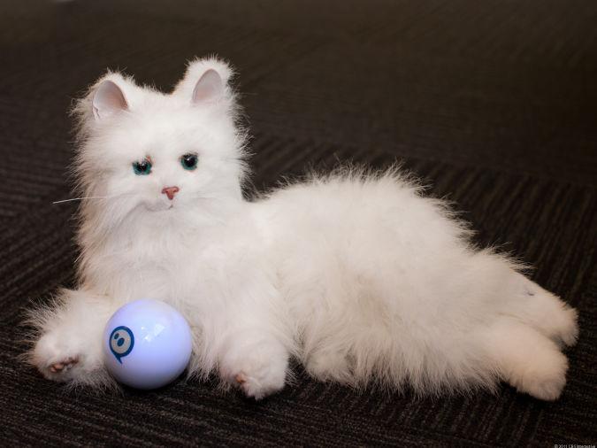 Sphero_cat Best 10 Robot Gift Ideas