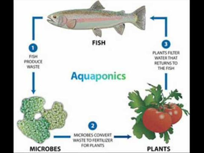 aquaponics Organic Gardening Secret for Growing Plants Abundantly and Quickly