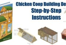 Photo of How to Build Your Own Inexpensive Chicken Coop Easily