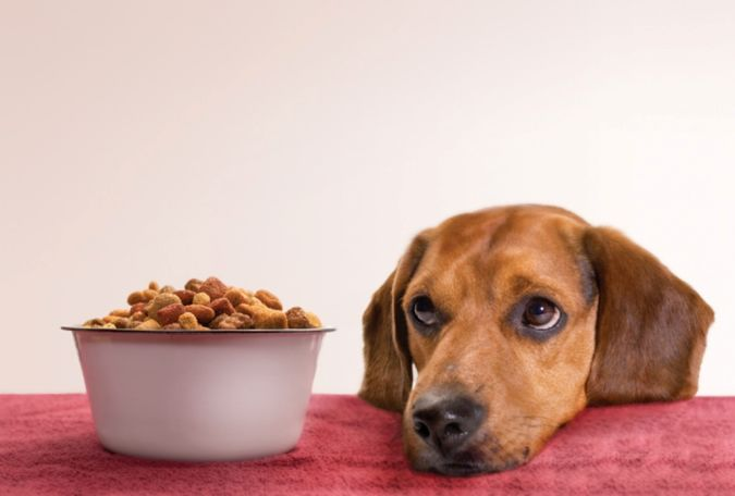 """dog-food How to Protect Your Dog Using """" Dog Food Secrets """""""
