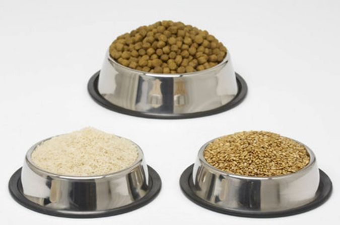 """dog-food1 How to Protect Your Dog Using """" Dog Food Secrets """""""