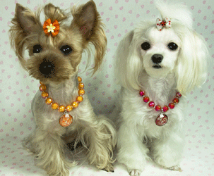 dog-necklace1-1 Dress Your Dog In Jewels