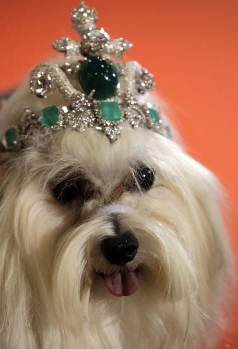 dog-tiara-475x694 Dress Your Dog In Jewels
