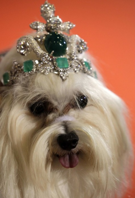 dog-tiara-475x694 Dress Your Dog In Jewels