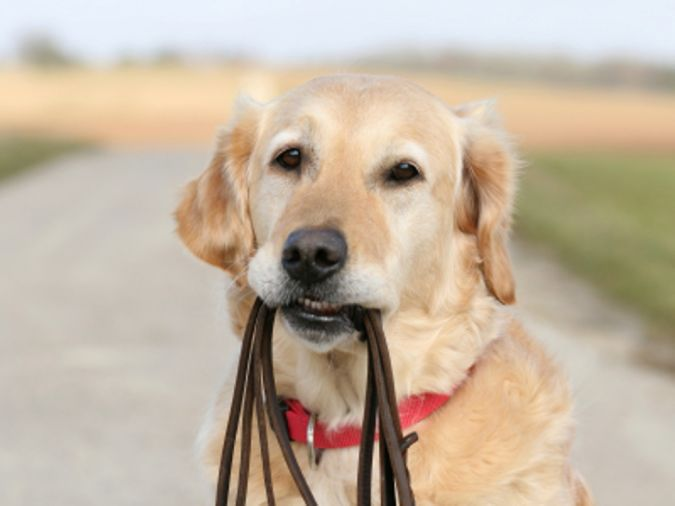 dog-training-business1 The Secrets of Training Dogs Are Now Revealed