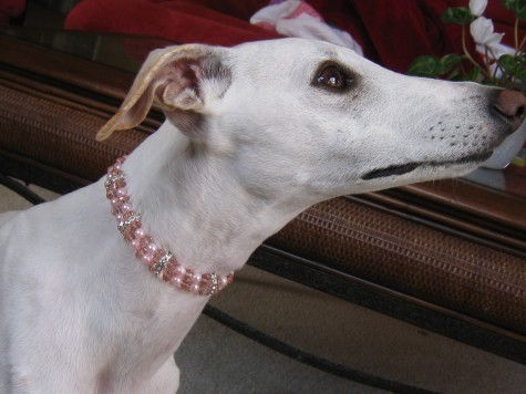 il_fullxfull.175917790-475x356 Dress Your Dog In Jewels