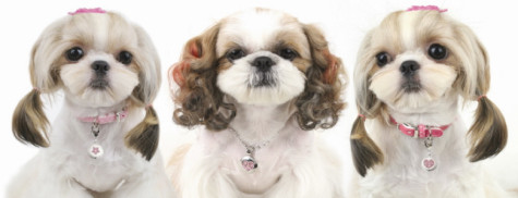 jewelry-475x182 Dress Your Dog In Jewels