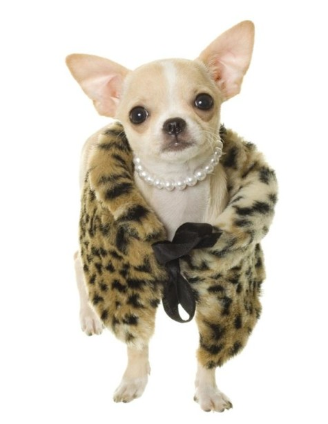 jewelry-dog-fur-coat-475x613 Dress Your Dog In Jewels