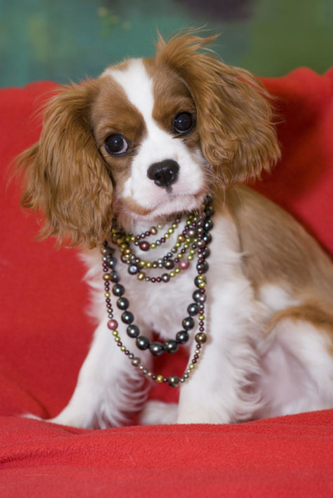 jewelry-dog-necklace-475x710 Dress Your Dog In Jewels