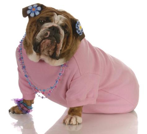 jewelry-dog-tshirt-475x433 Dress Your Dog In Jewels