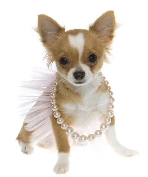 jewelry-dog-tutu-475x568-1 Dress Your Dog In Jewels