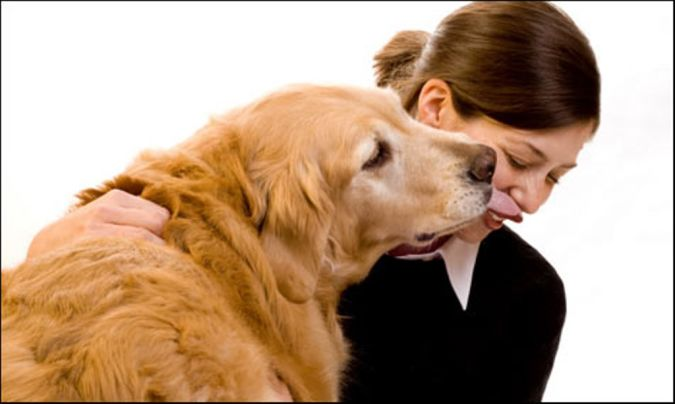 older-dog The Secrets of Training Dogs Are Now Revealed