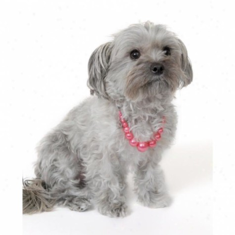 pet-head-faux-pink-pearl-necklace-475x475 Dress Your Dog In Jewels