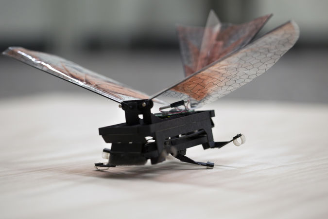 robotinsect How do Robo-Bugs Look Like?