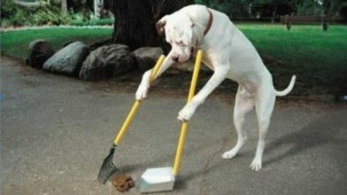 Photo of The Secrets of Training Dogs Are Now Revealed