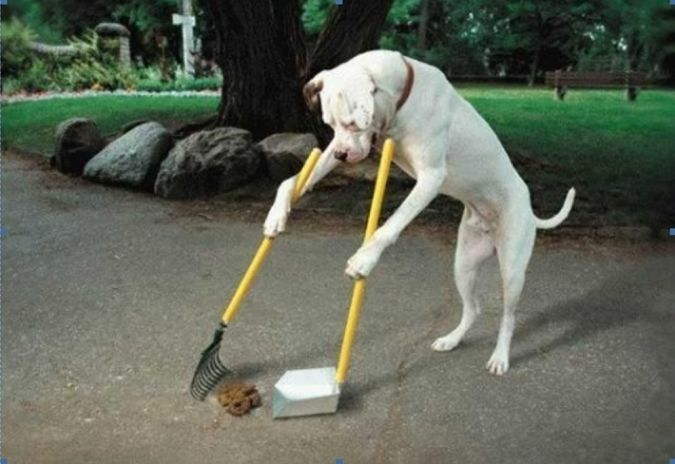 sweep-the-floor The Secrets of Training Dogs Are Now Revealed
