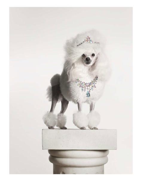 torkil-gudnason-475x604 Dress Your Dog In Jewels
