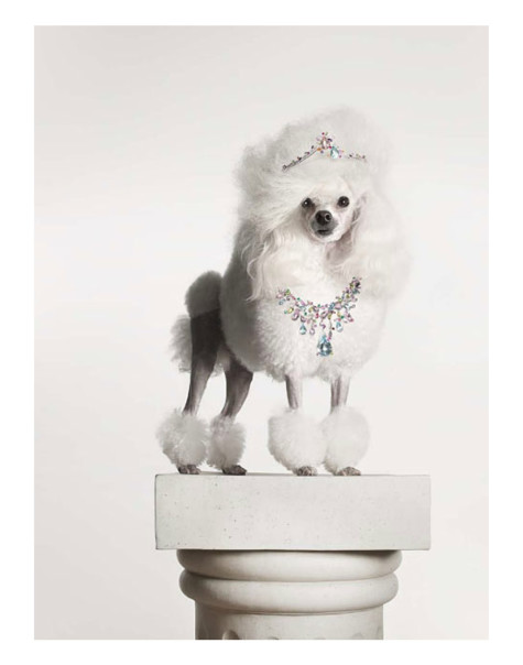 torkil-gudnason-475x604 Dress Your Dog In Jewels