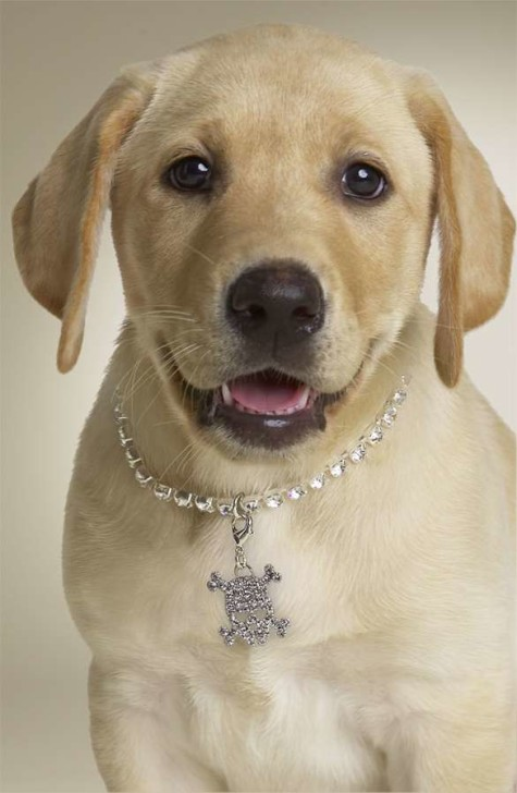 xpuppy-bling-nordstroms-never-wants-you-to-leave-their-store.jpeg.pagespeed.ic_.ityIXJDbe-475x728 Dress Your Dog In Jewels