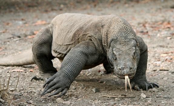 131463351_31n Top 15 Ugliest Animals