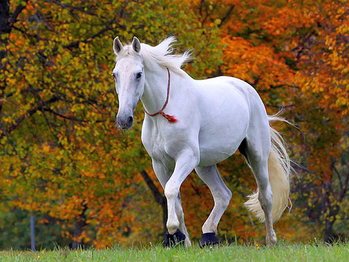 13321448361 Top 20 Most Beautiful Horses In The World