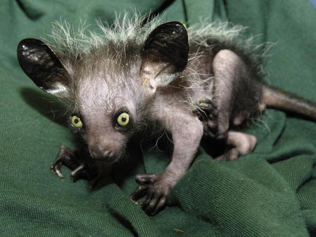 231081-ugly-animals Top 15 Ugliest Animals
