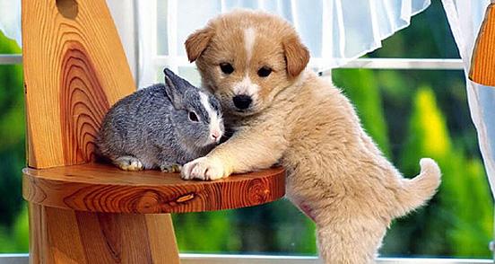 34 Top 30 Cutest Animals