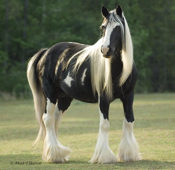 35786_122450 Top 20 Most Beautiful Horses In The World