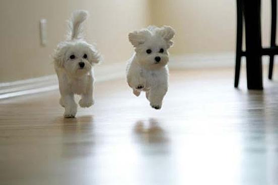 41 Top 30 Cutest Animals